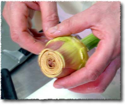 Preparing an Artichoke: The Tip, Trimmed