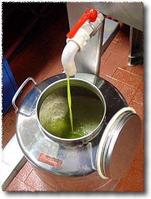 Olive Oil Fresh from the Press!