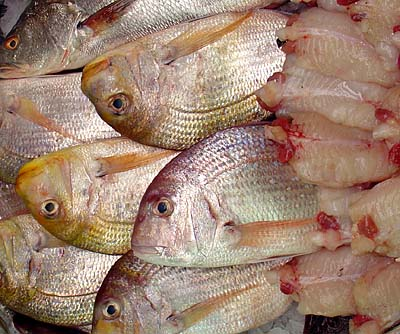 Fresh Fish Look Bright
