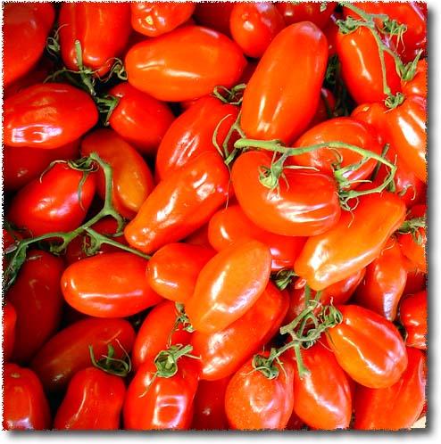 Pomodori San Marzano, Plum Tomatoes from San Marzano, on Mt. Vesuvius
